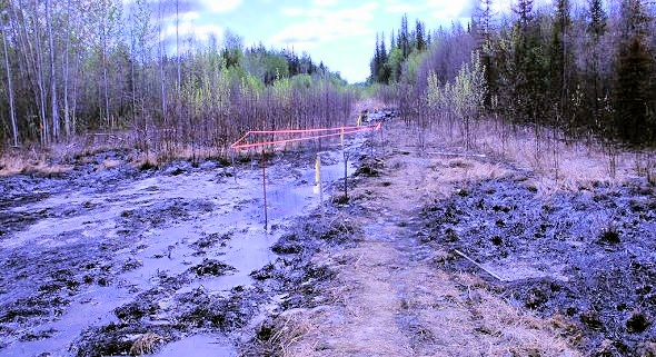 Section of area contaminated by toxic waste in northern Alberta (Credit: Nathan Vanderklippe/Dene Tha)